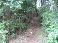 小園の雑木林を抜け