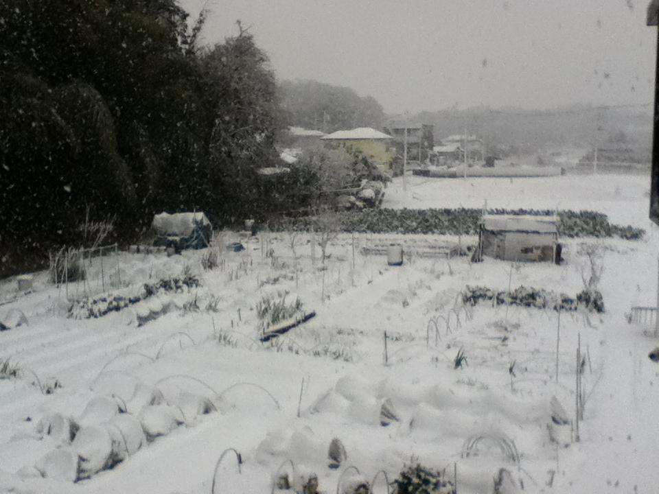 初雪ダー!事務所からの眺めですよ
