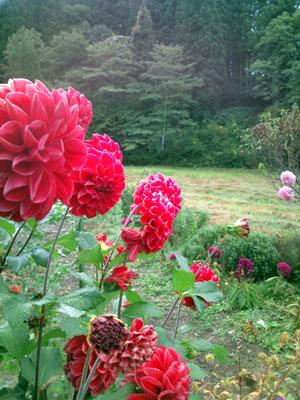 庭の草花が色鮮やか