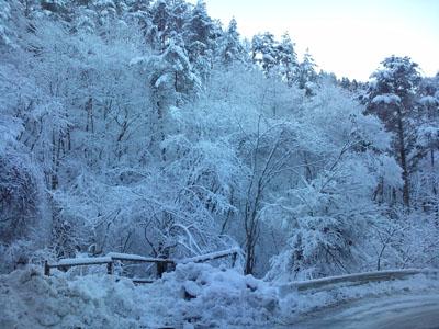 都留の峠で見られる樹氷