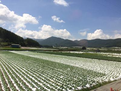 野辺山の里 高原野菜の景色